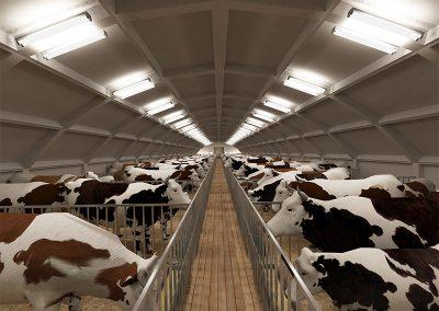 001---Cow-farm