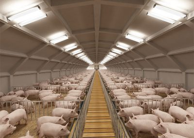 003---Pig-farm
